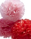 POM SMALL ROUGE 25, 30 ET 35 POM SMALL ROUGE / 15PCDC011DMU999